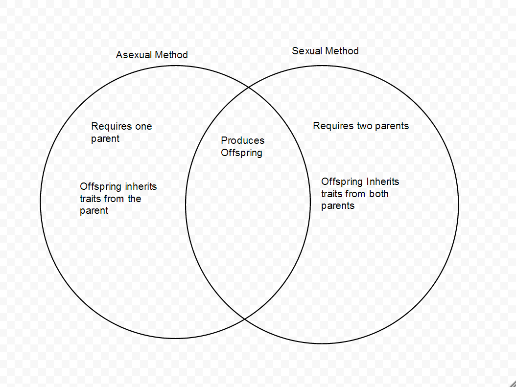 2 similarities between asexual and sexual reproduction diagram